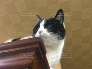 猫三昧 - No.75191