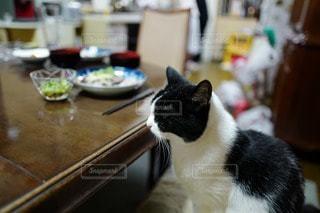 猫三昧 - No.75196