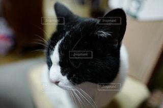 猫が好き - No.83905