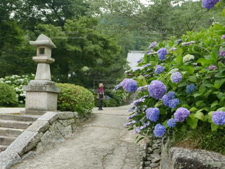 花 - No.120855