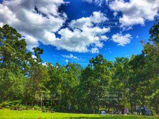 木々が背景に広い大きな緑のフィールドの写真・画像素材[2732726]