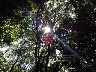 森林の写真・画像素材[283277]