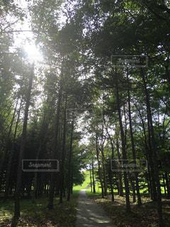 森林の写真・画像素材[283306]