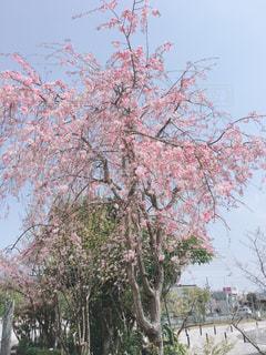 春の写真・画像素材[1989132]