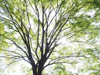 美しい緑と木漏れ日の写真・画像素材[1895623]