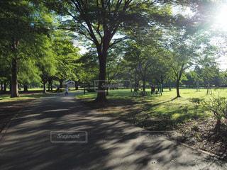 午後の木漏れ日の写真・画像素材[2183577]