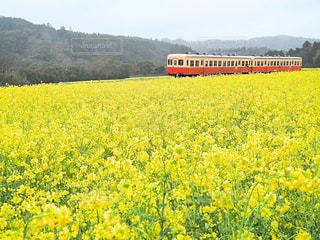 春の風景の写真・画像素材[2285579]