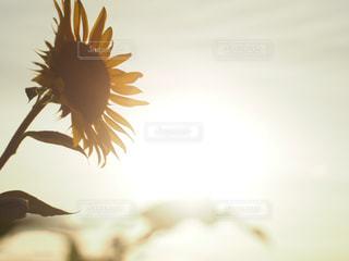 夏の夕暮れの写真・画像素材[2344416]