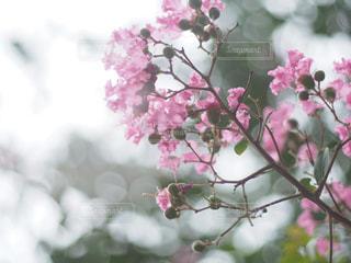 秋の花の写真・画像素材[2501817]