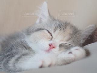 仔猫の昼寝の写真・画像素材[2683028]