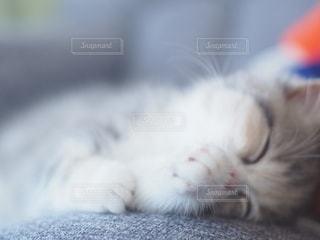 寝落ちの写真・画像素材[2691821]