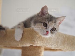 寛ぐ子猫の写真・画像素材[2806562]