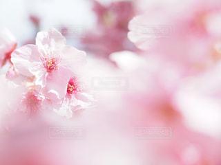 花のクローズアップの写真・画像素材[3253420]