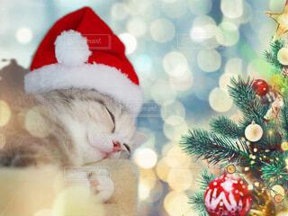 帽子をかぶった猫の写真・画像素材[3973541]