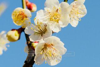 近くの花のアップの写真・画像素材[824823]
