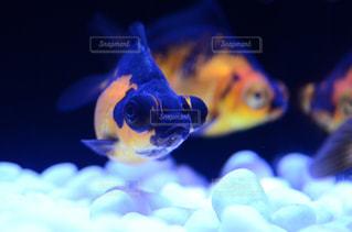近くに魚のアップの写真・画像素材[1242049]