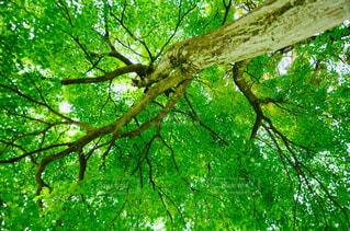 森の木の写真・画像素材[2292553]