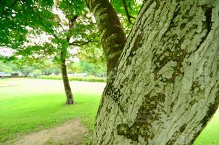 森の木の写真・画像素材[2292591]