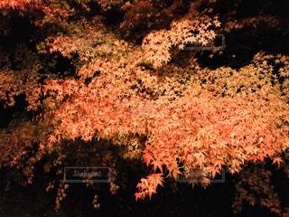 空に花火の写真・画像素材[999571]