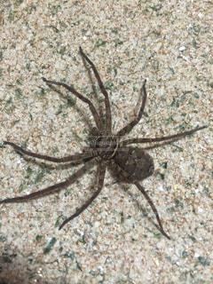 蜘蛛の写真・画像素材[999629]