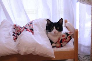 ベッドの上に座っている猫の写真・画像素材[1895292]