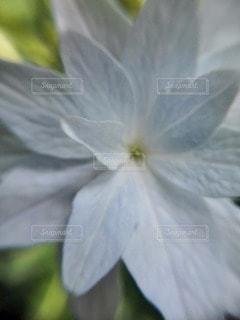 花の写真・画像素材[75690]