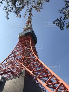 東京タワーの上部に樹木の写真・画像素材[1905798]