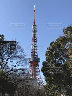 樹木の中からそびえ立つ東京タワーの写真・画像素材[1905830]