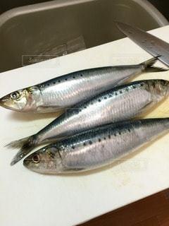 魚の写真・画像素材[14018]