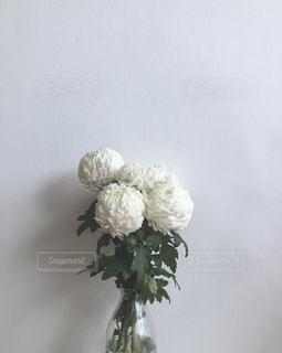 白い花の写真・画像素材[1926925]
