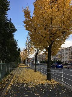 秋から冬への写真・画像素材[914840]