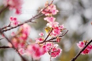自然の写真・画像素材[69599]