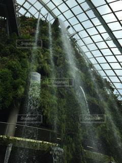 シンガポールのフラワーパークの写真・画像素材[1931431]