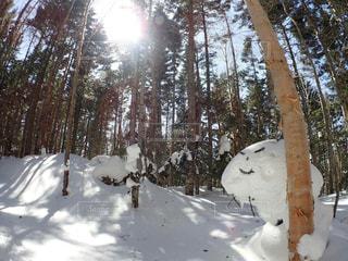 雪に覆われた木の写真・画像素材[1898490]