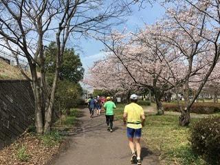 春のマラソンの写真・画像素材[73955]