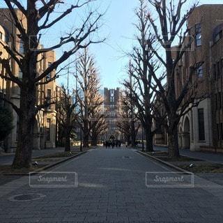 東京大学本郷キャンパスの銀杏並木の写真・画像素材[73963]