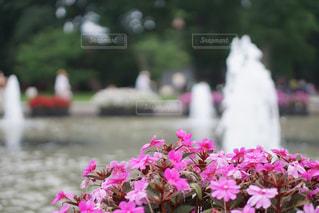 噴水と花の写真・画像素材[659389]