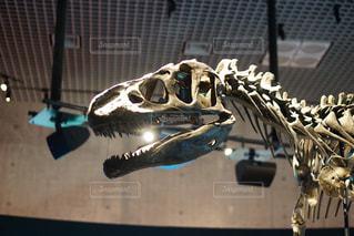化石の写真・画像素材[659393]