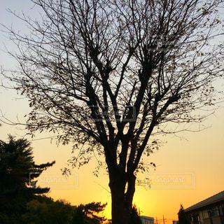 大きな木の写真・画像素材[847263]