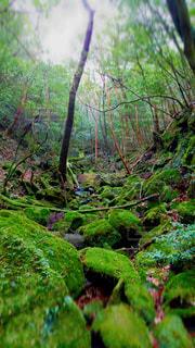 屋久島散策の写真・画像素材[2049268]