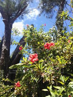 南国の花の写真・画像素材[2049518]