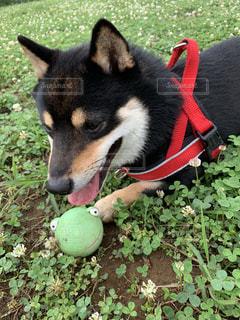 ボール大好き!の写真・画像素材[2271885]
