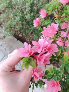 花の写真・画像素材[2051911]