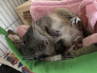 ハンモックでお昼寝の写真・画像素材[2701300]