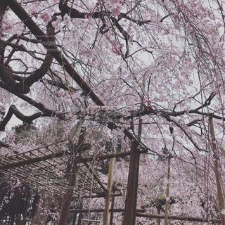 フォレスト内のツリーの写真・画像素材[1899940]