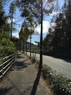 道の端に木のパスの写真・画像素材[975986]