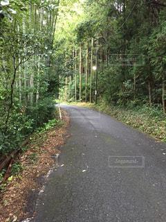 道の端に木のパスの写真・画像素材[976029]