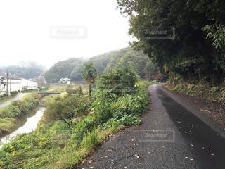 道の端に木のパスの写真・画像素材[976054]