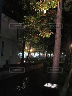 夜のライトアップされた街の写真・画像素材[976087]