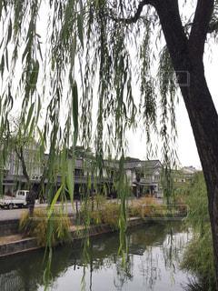 水の体の横にあるツリーの写真・画像素材[976088]